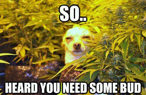 26 Best 420  Weed Memes  WeKnowMemes