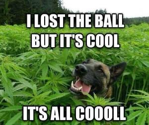 stoner-dog-memes