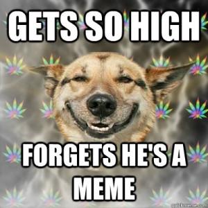 stoner-memes-dog-forgets-hes-a-meme
