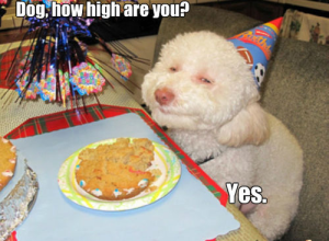 stoner dog yes high