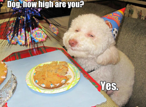 stoner dog yes high the history of stoner memes all things dank,Dank Memes Dog