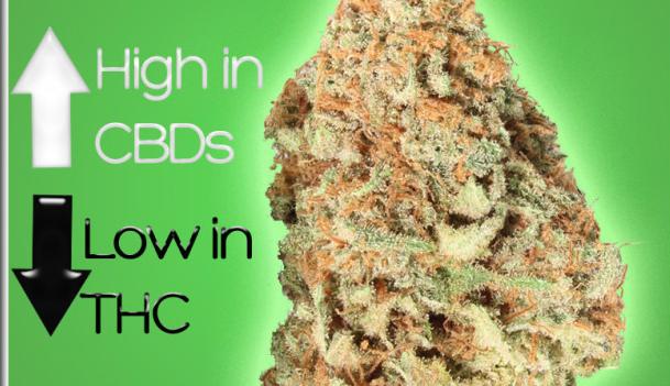 Marijuana strains high in CBD